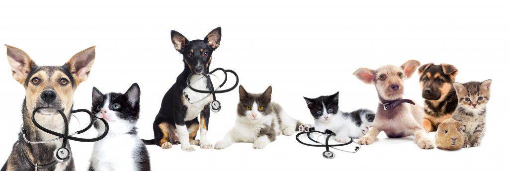 relief veterinary technician