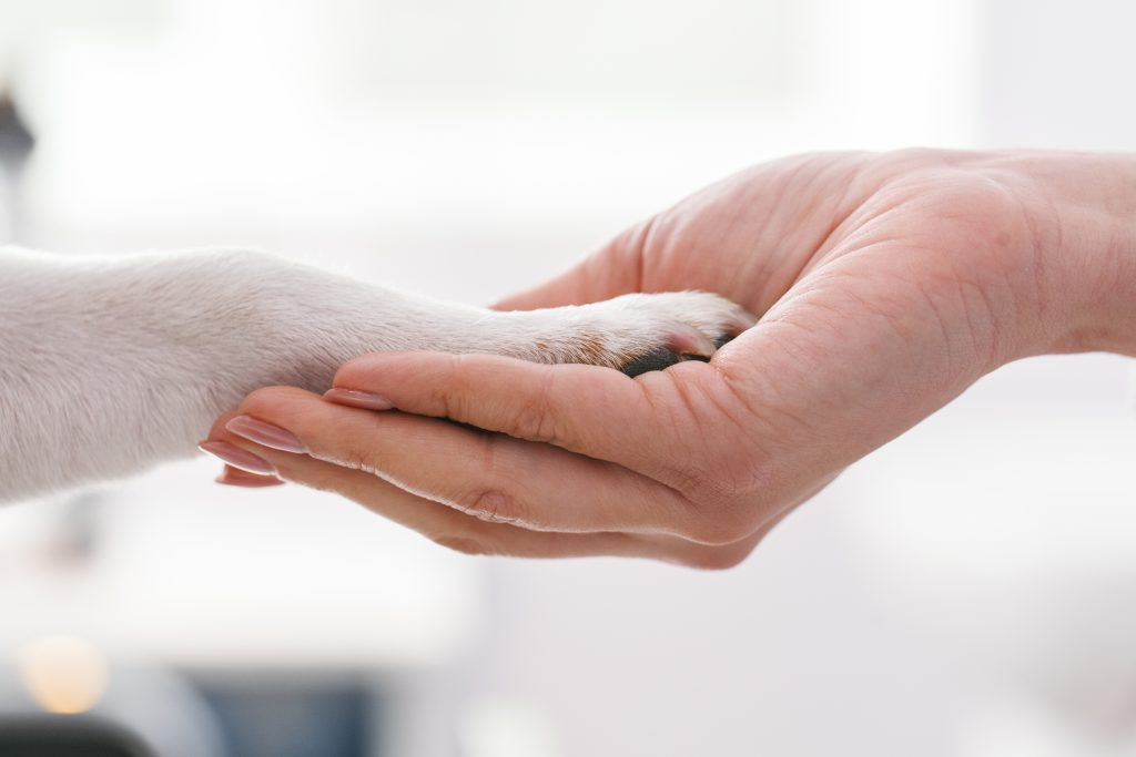 Veterinary Relief